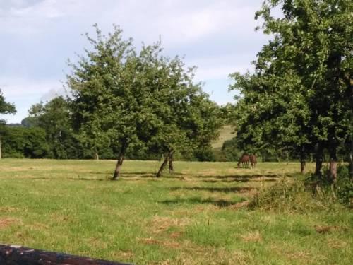 Les Crins Verts : Guest accommodation near Gacé