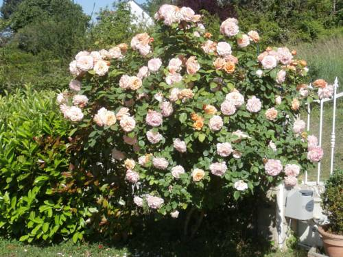 Les Hauts d'Amboise : Bed and Breakfast near Pocé-sur-Cisse