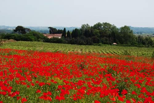 Domaine Saint Ferreol : Guest accommodation near Adissan