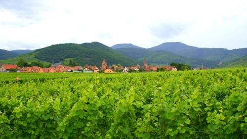 Chambre d'Hotes Le Vogelgarten : Bed and Breakfast near Sigolsheim
