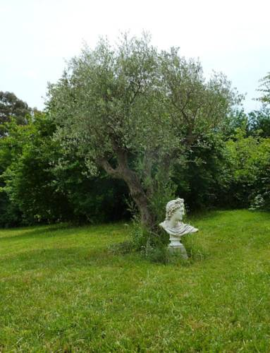 Villa Elysae : Bed and Breakfast near La Roquette-sur-Siagne