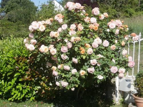 Les Hauts d'Amboise : Bed and Breakfast near Pocé-sur-Cisse