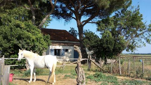Mas de Reboul vieux : Guest accommodation near Saint-Just