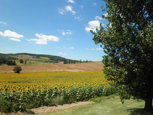 Domaine de la Vigne : Bed and Breakfast near Damiatte