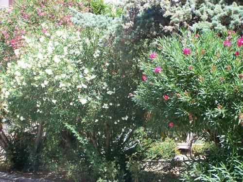 Lauriers Roses : Apartment near Ajaccio