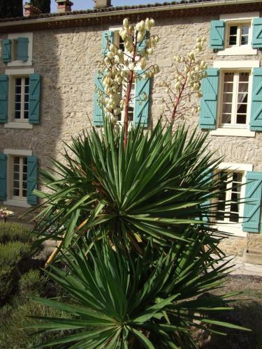 Domaine Saint Andrieu : Guest accommodation near Ladern-sur-Lauquet