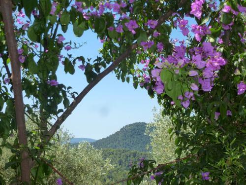 L'Origane : Bed and Breakfast near Duranus