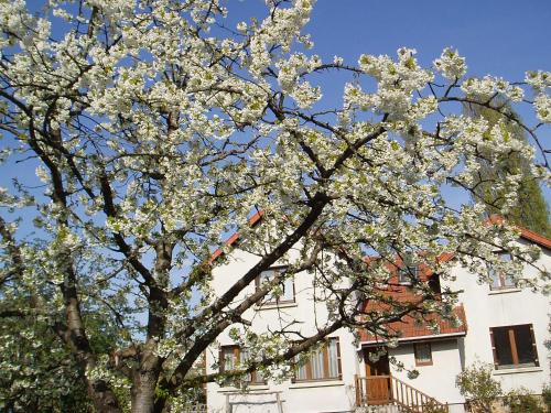 appartement Draveil : Apartment near Ris-Orangis
