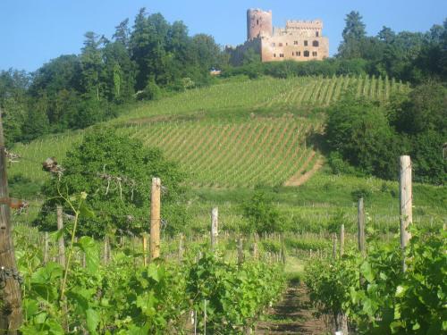 Relais des vignes : Apartment near Saint-Hippolyte