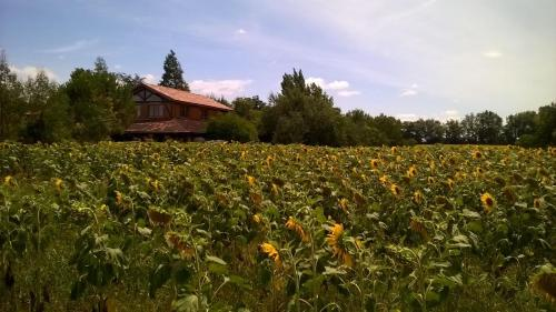 Berdale : Bed and Breakfast near Vic-Fezensac