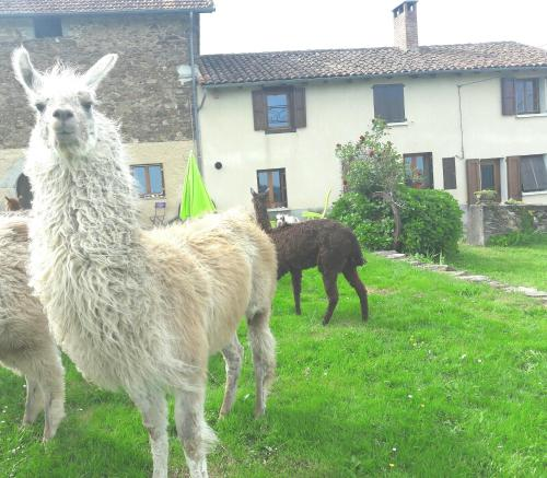 Ferme Lamalpapoche : Guest accommodation near Lauresses