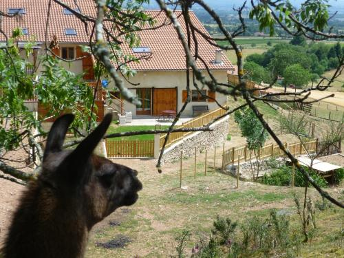 La Bruyère aux Lamas : Guest accommodation near Noailly