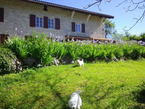 Chambre d'hôtes La Haie Fleurie : Bed and Breakfast near Saint-Alban