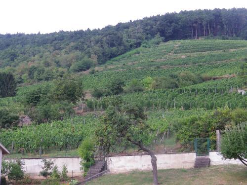 Gite de Mr et Mme Woinson : Guest accommodation near Lautenbachzell