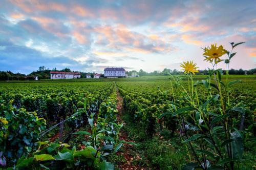 Gites Chateau Comblanchien : Guest accommodation near Corgoloin