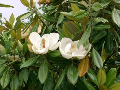 Bastide de Magnolia : Bed and Breakfast near Montauroux