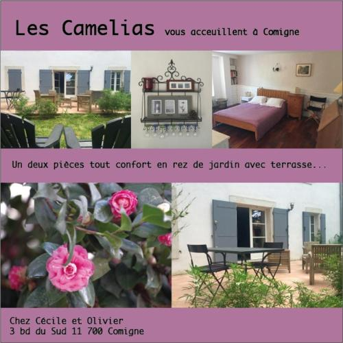 Camelias/Feïjoas Apartments : Apartment near Saint-Couat-d'Aude