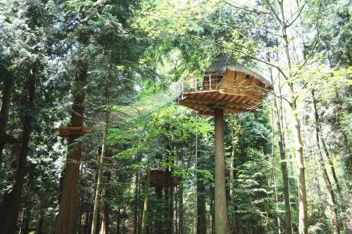 Insolite dans les arbres Les Ormes, Epiniac : Bed and Breakfast near Lanrigan