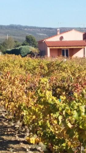 Gîte Au Milieu des Vignes : Guest accommodation near Le Castellet