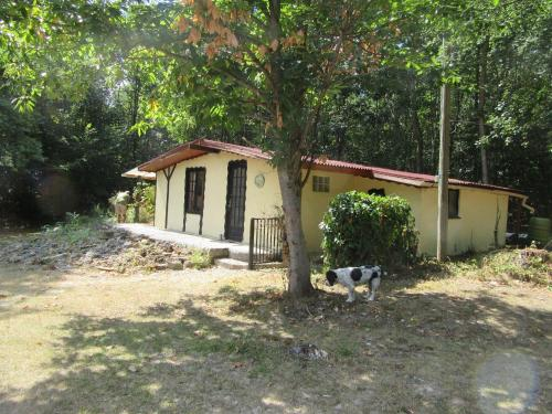woodlands : Guest accommodation near Plassac-Rouffiac
