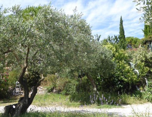Villa Sainte-Anne : Guest accommodation near Flayosc