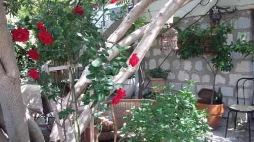 Cielito Lindo : Apartment near Lattes